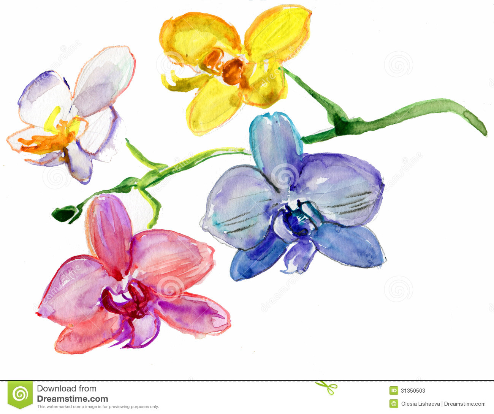 Orquídeas pintadas de la acuarela Fotos de archivo