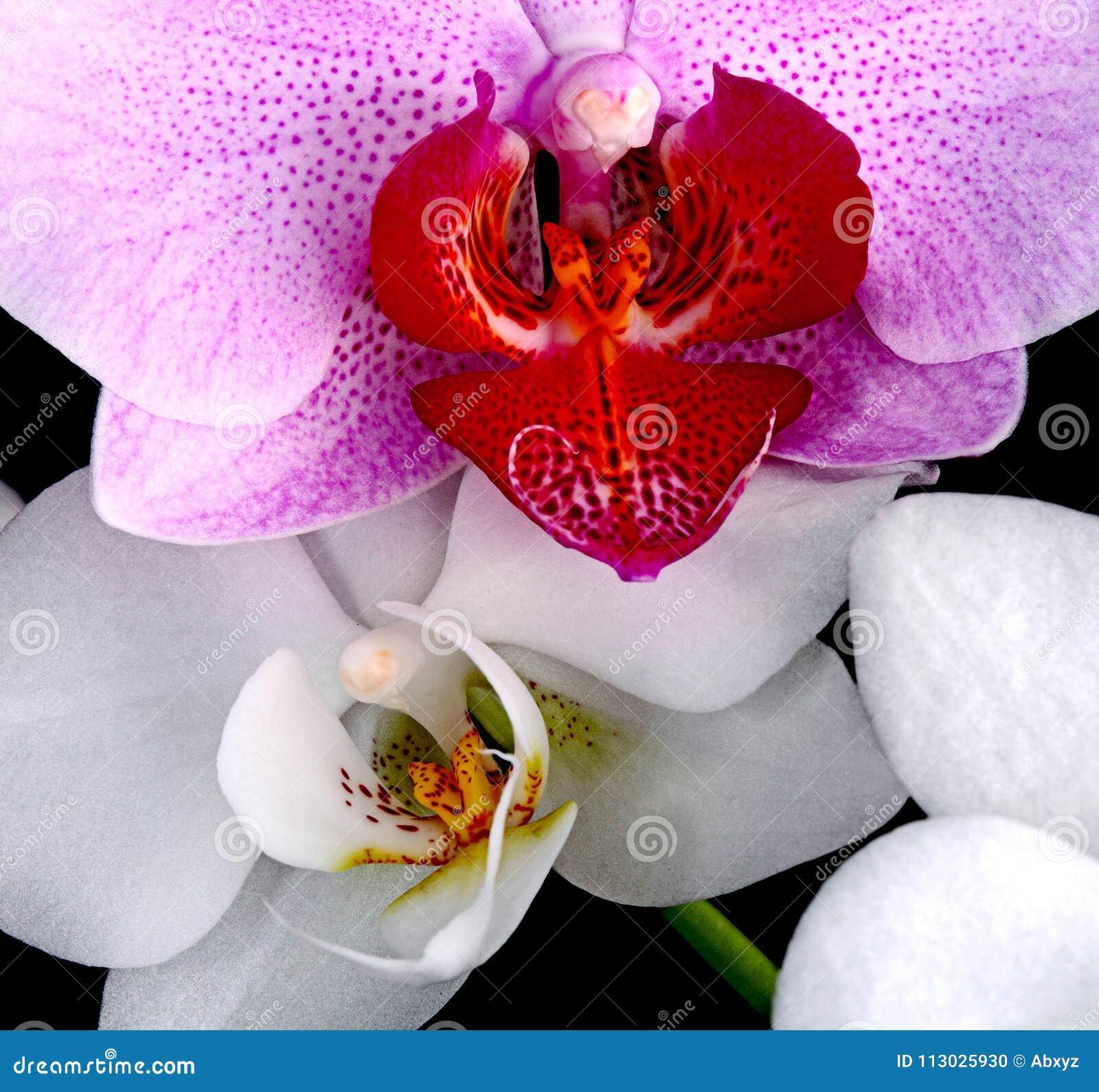 Orquídeas violetas y blancas