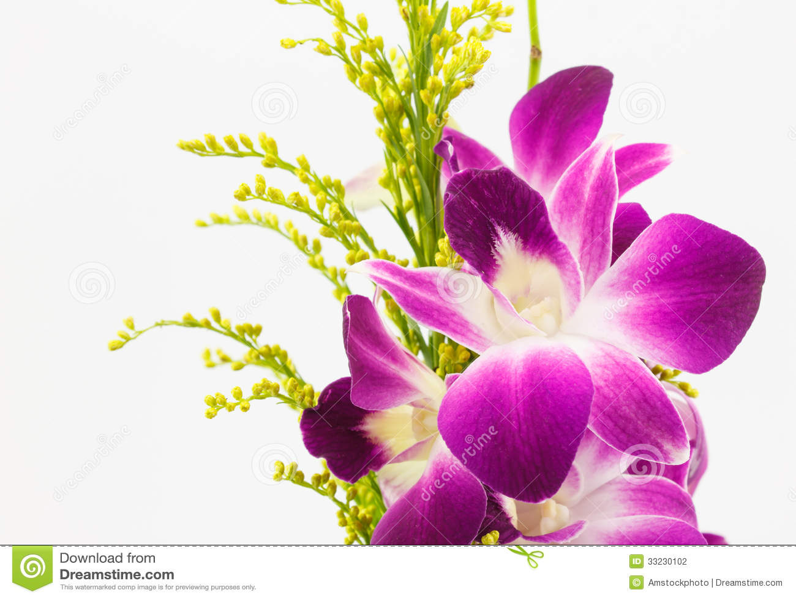 Orquídea violeta aislada en el fondo blanco