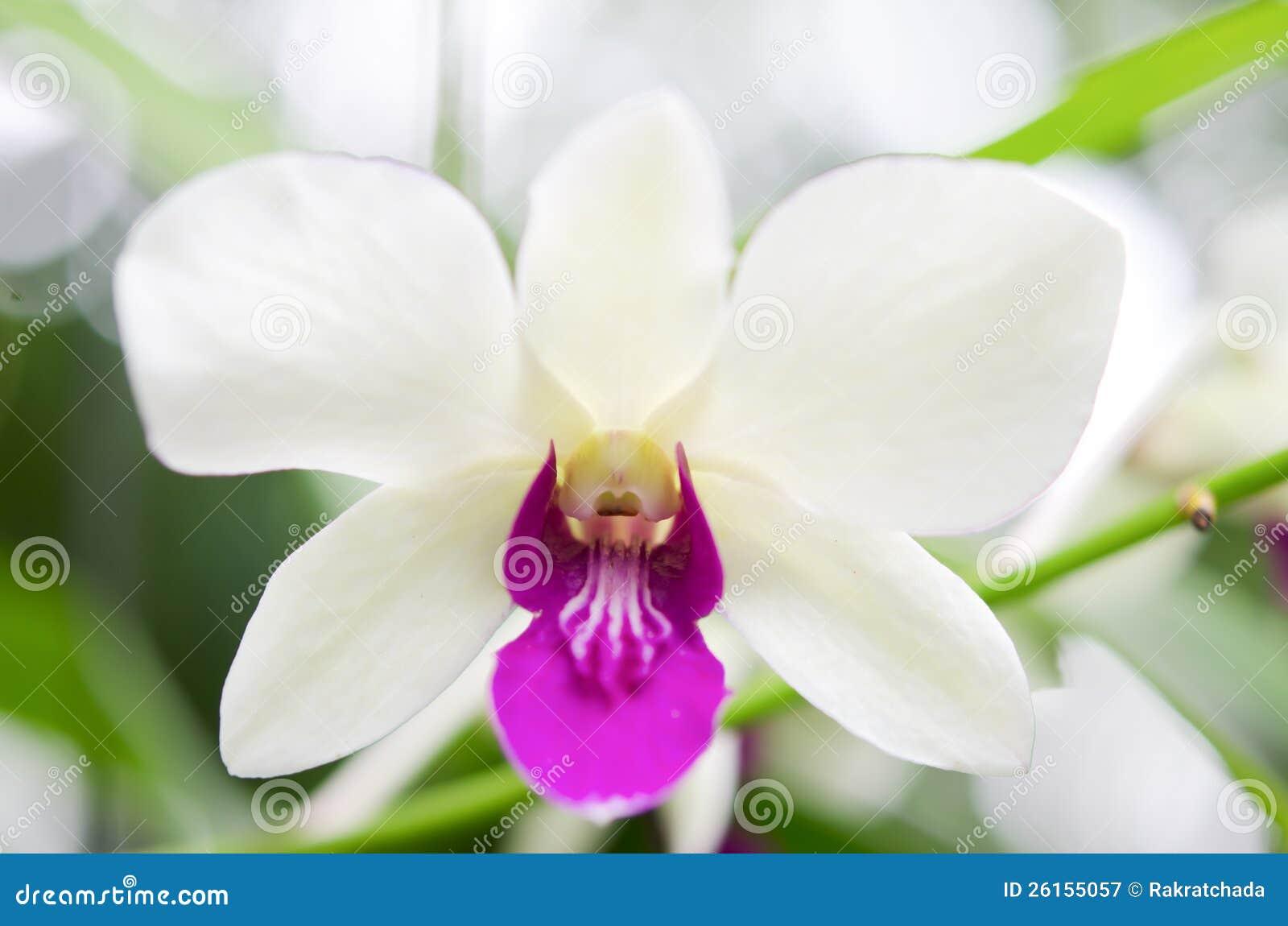 Orquídeas blancas y violetas