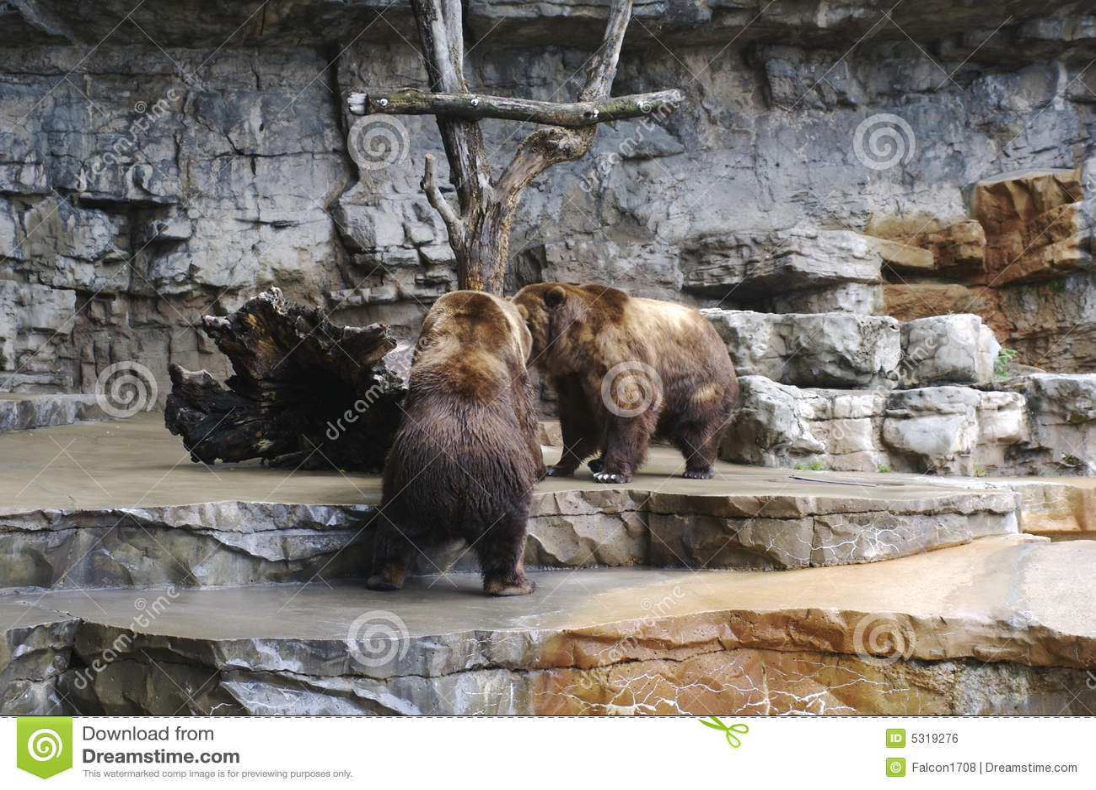 Download Orsi combattenti fotografia stock. Immagine di furry, nana - 5319276
