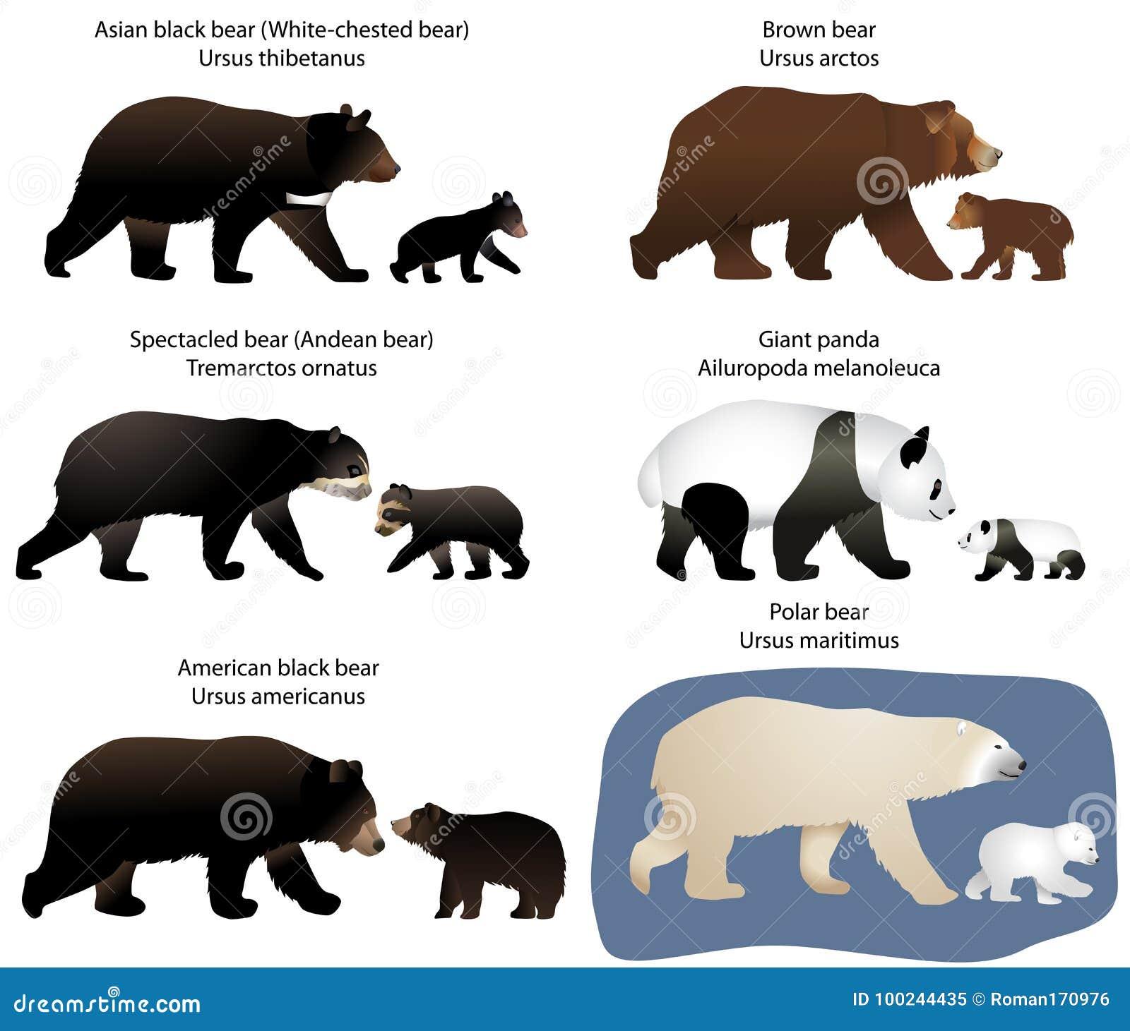 Orsi ed orso-cuccioli