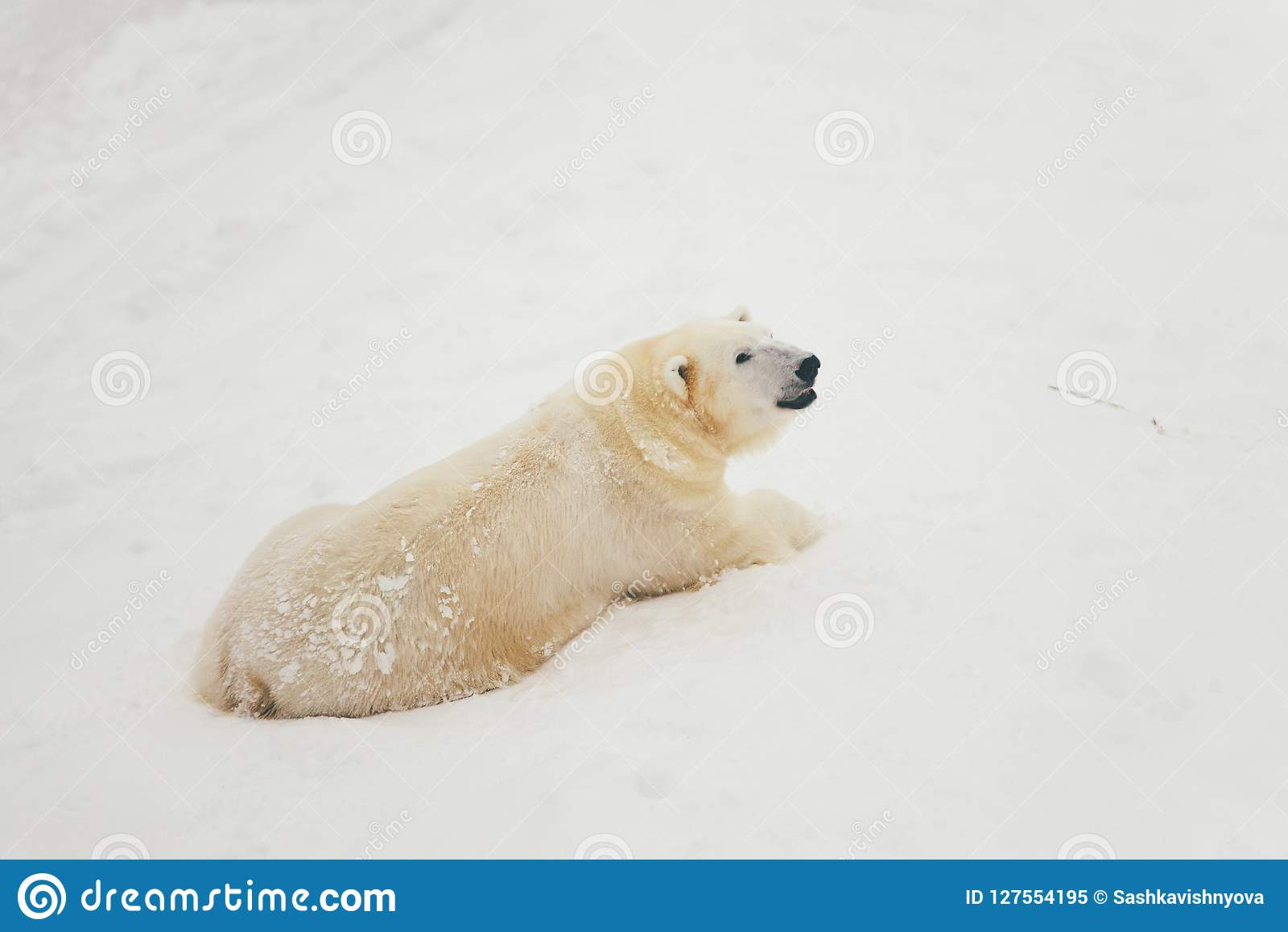 Orso polare bianco nella foresta della neve