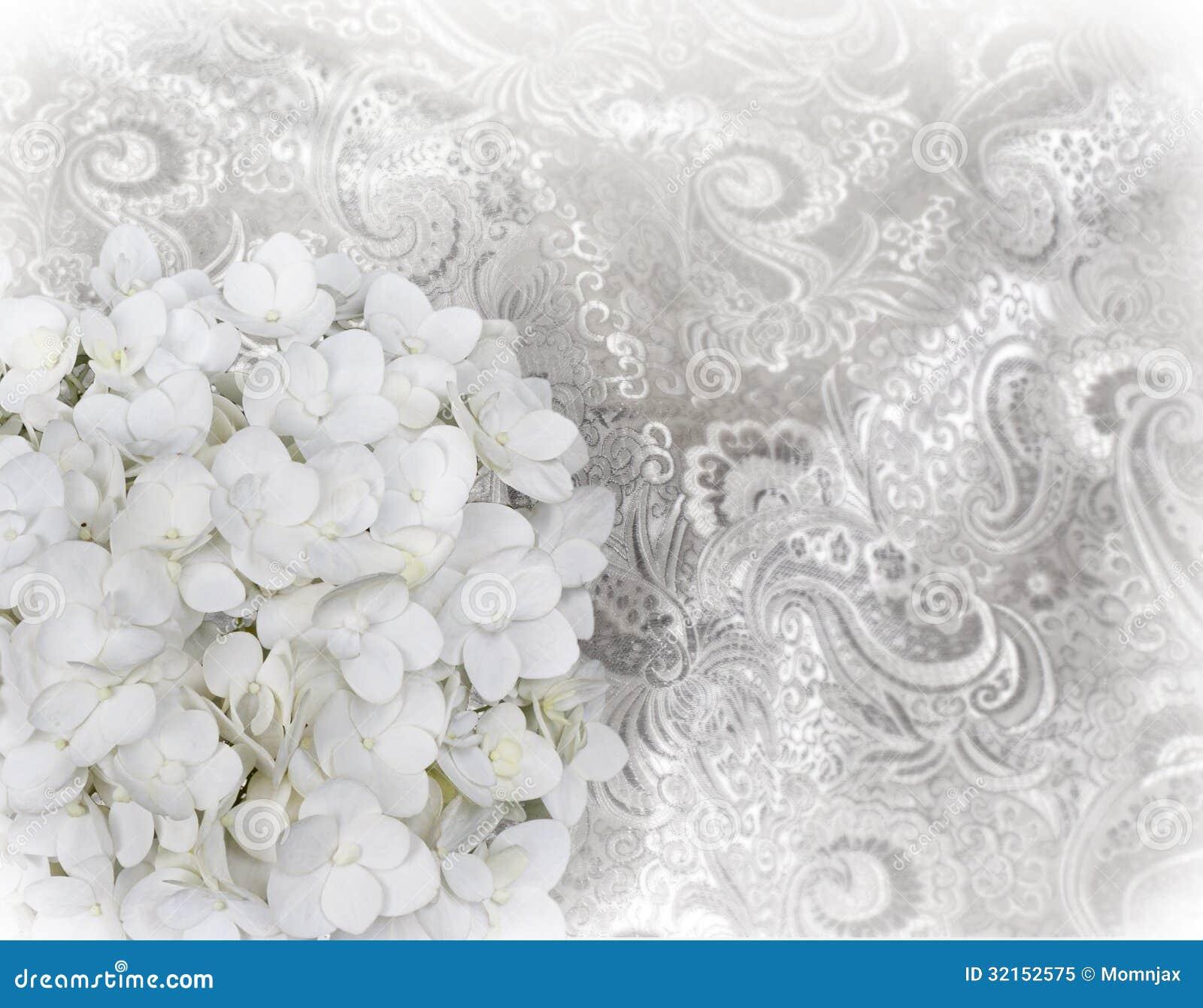 Ortensia bianca sulla tappezzeria bianca immagine stock for Tappezzeria prezzi