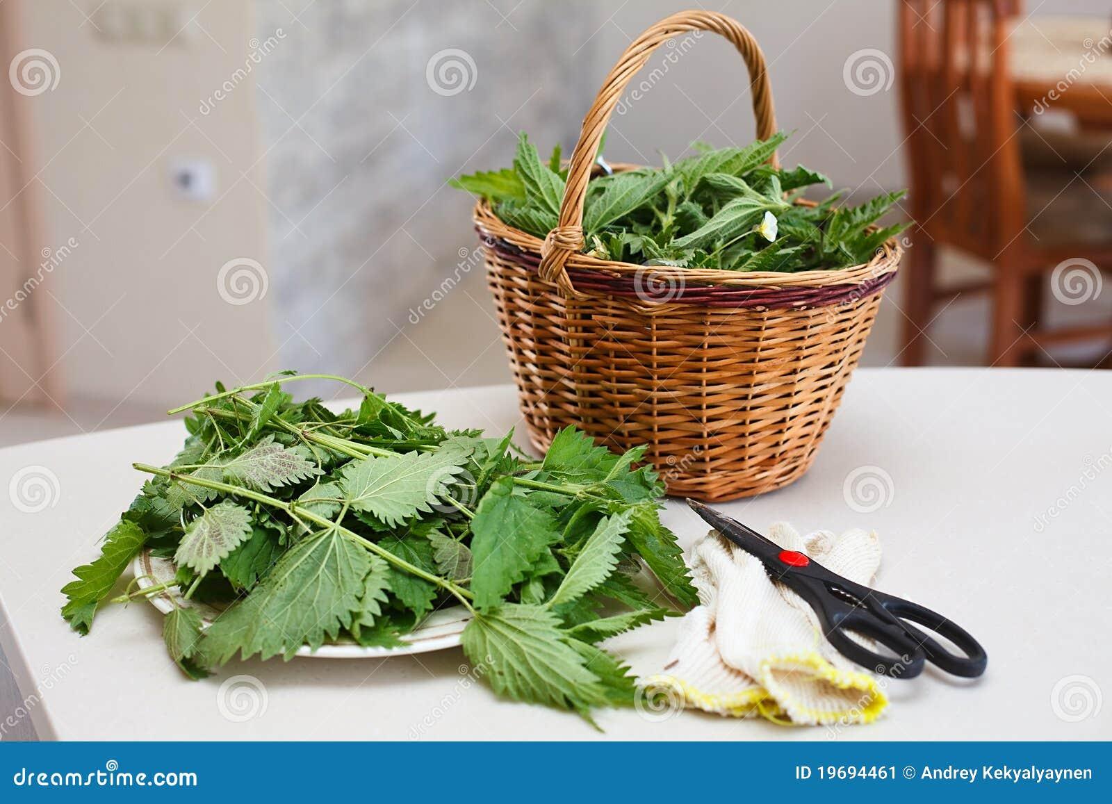Ortigas recolectadas frescas en cesta