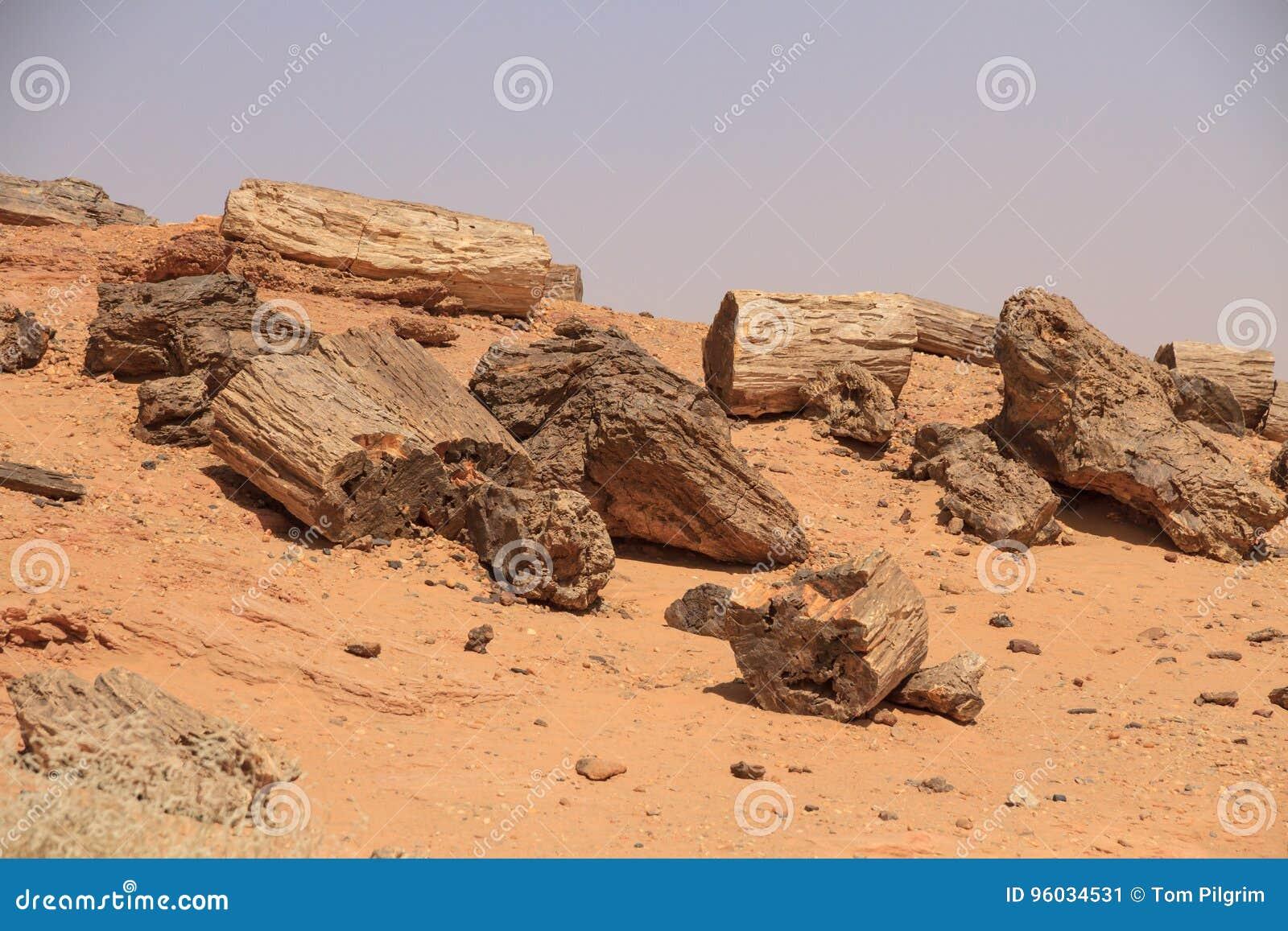 Osłupiali drzewa w Sudan