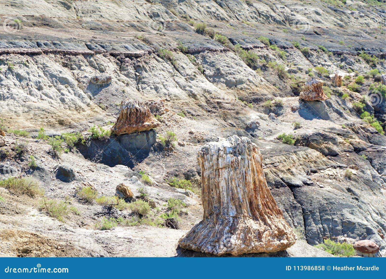 Osłupiali fiszorki cibor drzew jut oddolny od ich długiego pogrzebu