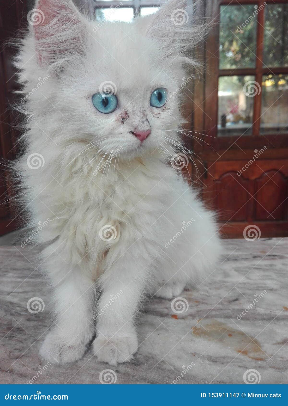 Os amantes do gato podem comprar este