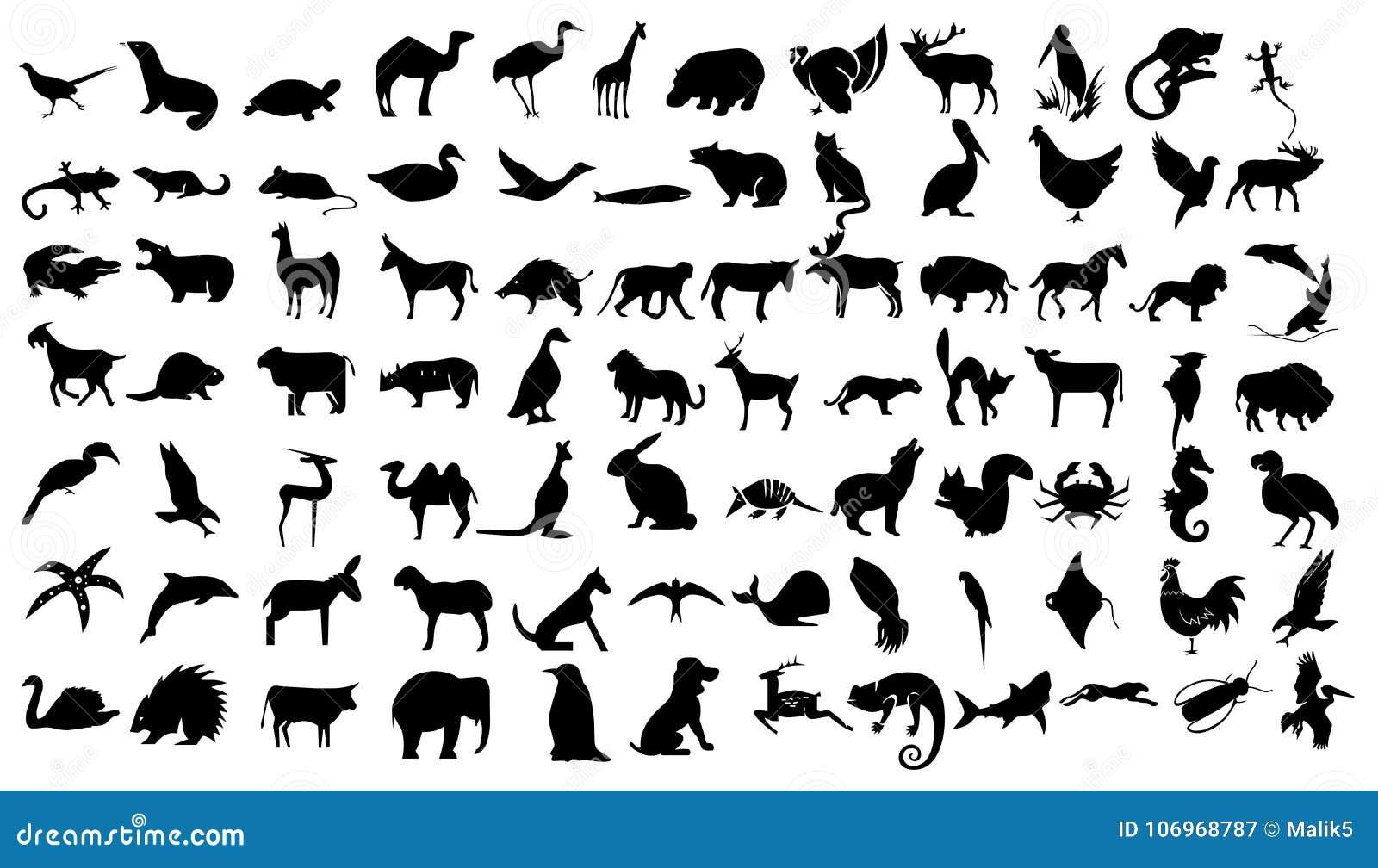 Os animais relacionaram o grupo do ícone