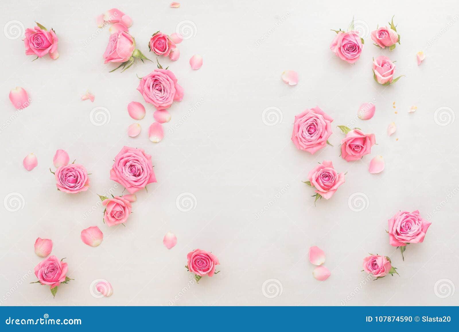 Os botões e as pétalas das rosas dispersaram no fundo branco