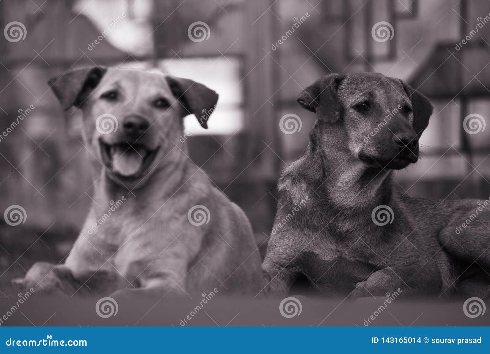 Os cães da rua são bonitos demasiado