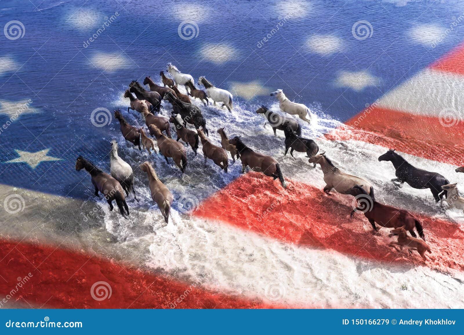 Os cavalos estão cruzando o rio Vista de acima