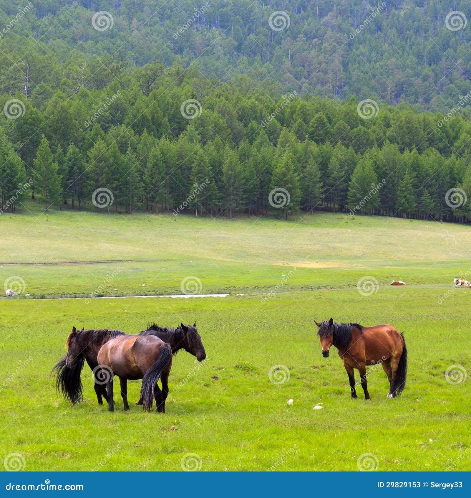 Cavalos na ilha Olkhon