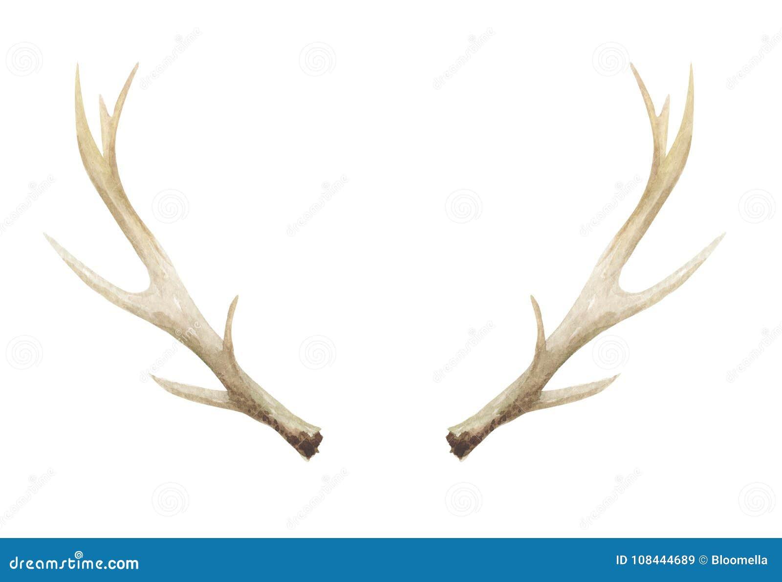 Os de klaxons de mâle de cerfs communs d andouillers d aquarelle peint