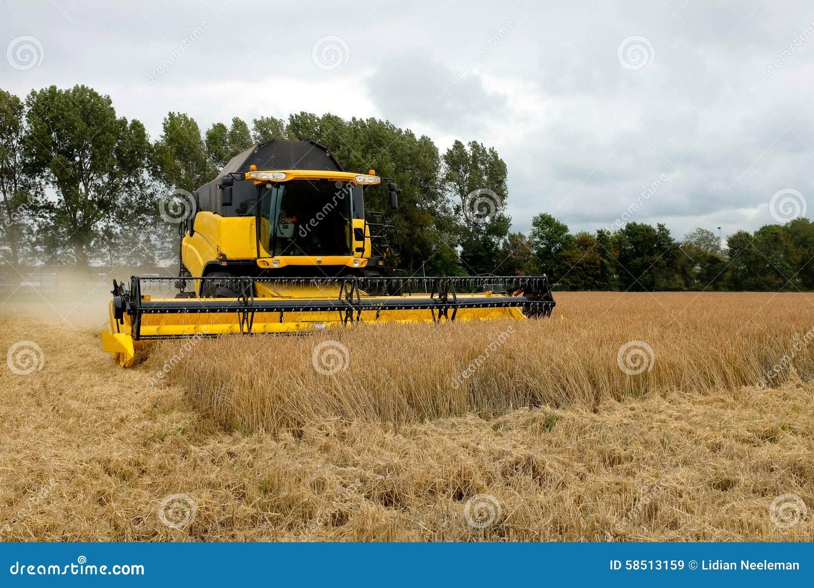 Os fazendeiros estão usando ceifeira de liga no fielt soletrado