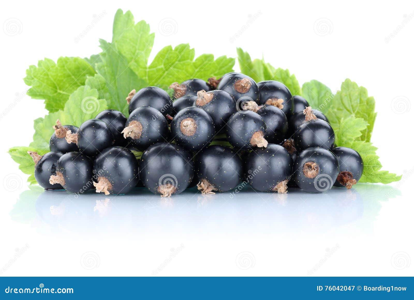 Os frutos frescos das bagas dos corintos do corinto preto frutificam isolado no wh