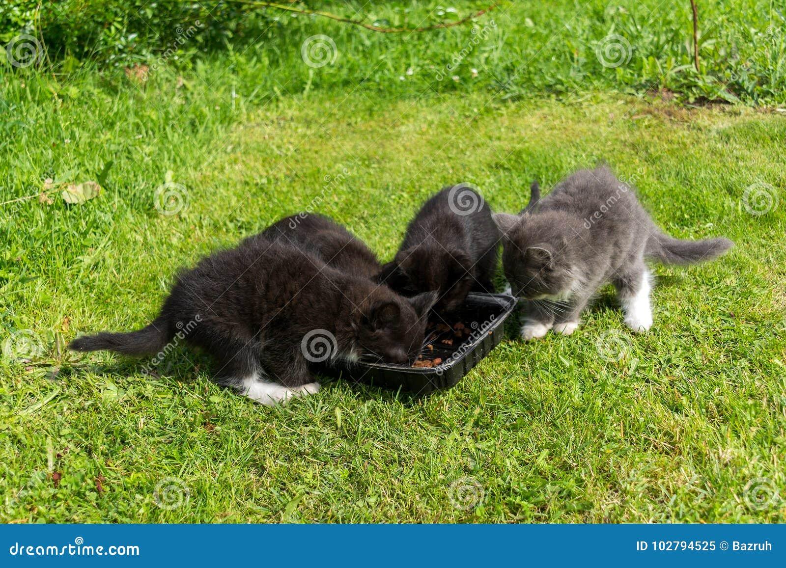 Os gatinhos novos comem