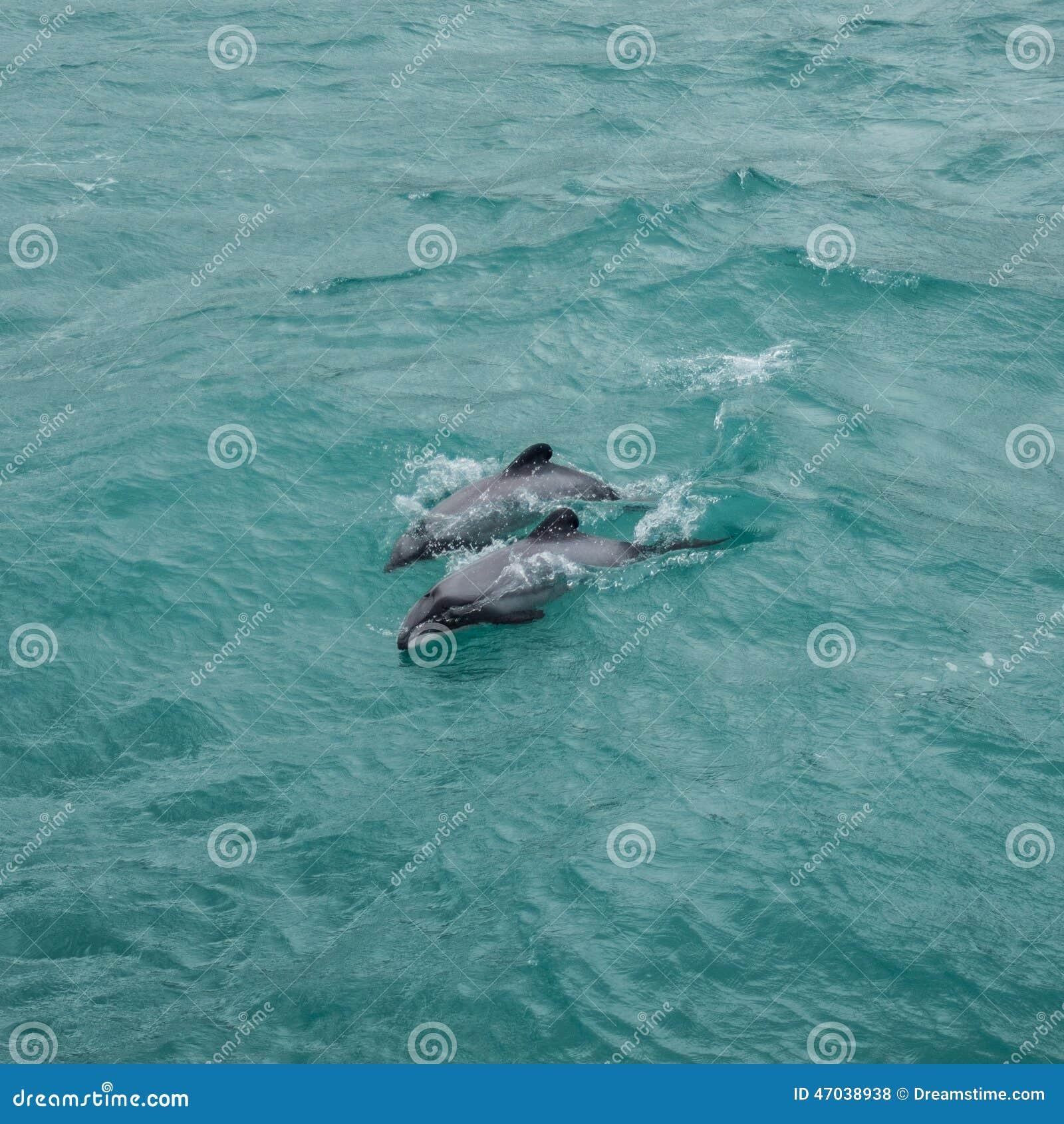 Os golfinhos de Hector