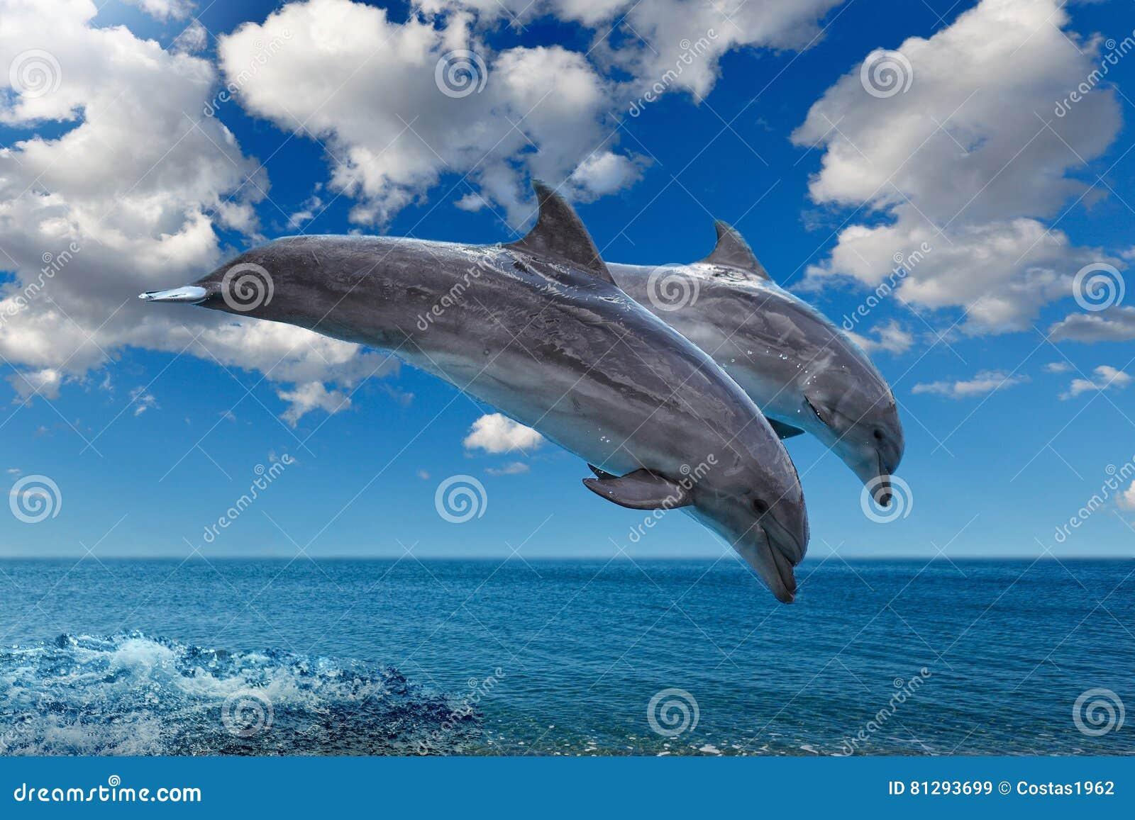 Os golfinhos que saltam no mar