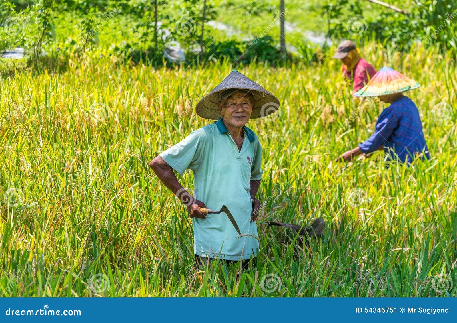 Os homens indonésios colhem sua almofada