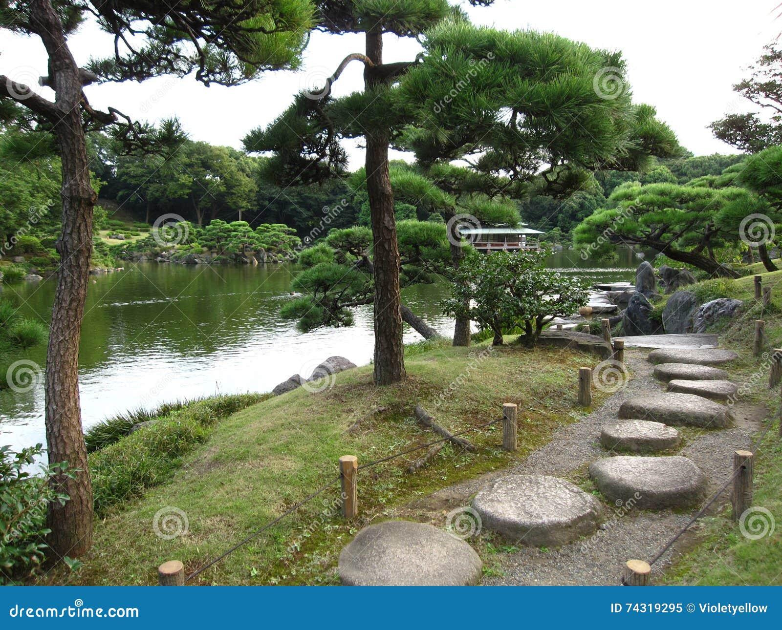 Os japoneses tradicionais dão uma volta o jardim com os pinheiros pretos japoneses