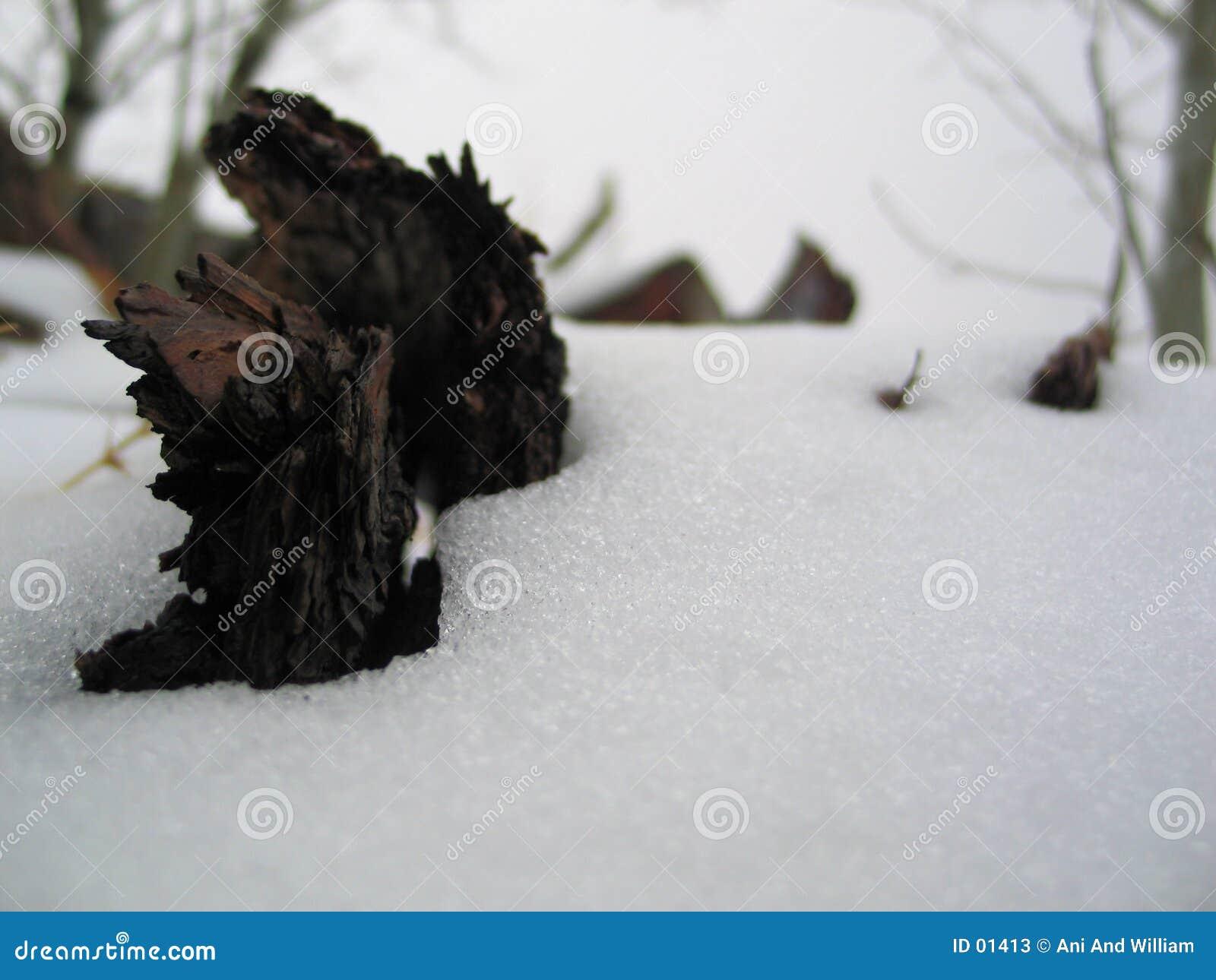 Os mortos de inverno