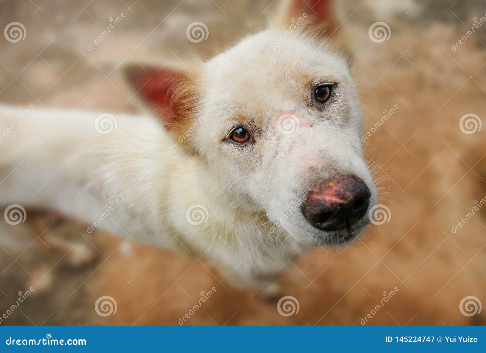 Os olhos do cão completamente das perguntas