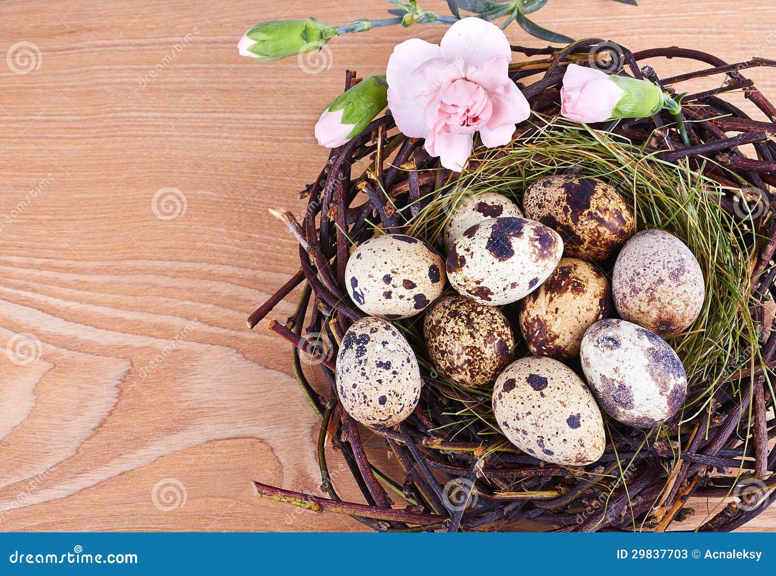 Os ovos e as penas de codorniz em um ninho de Easter