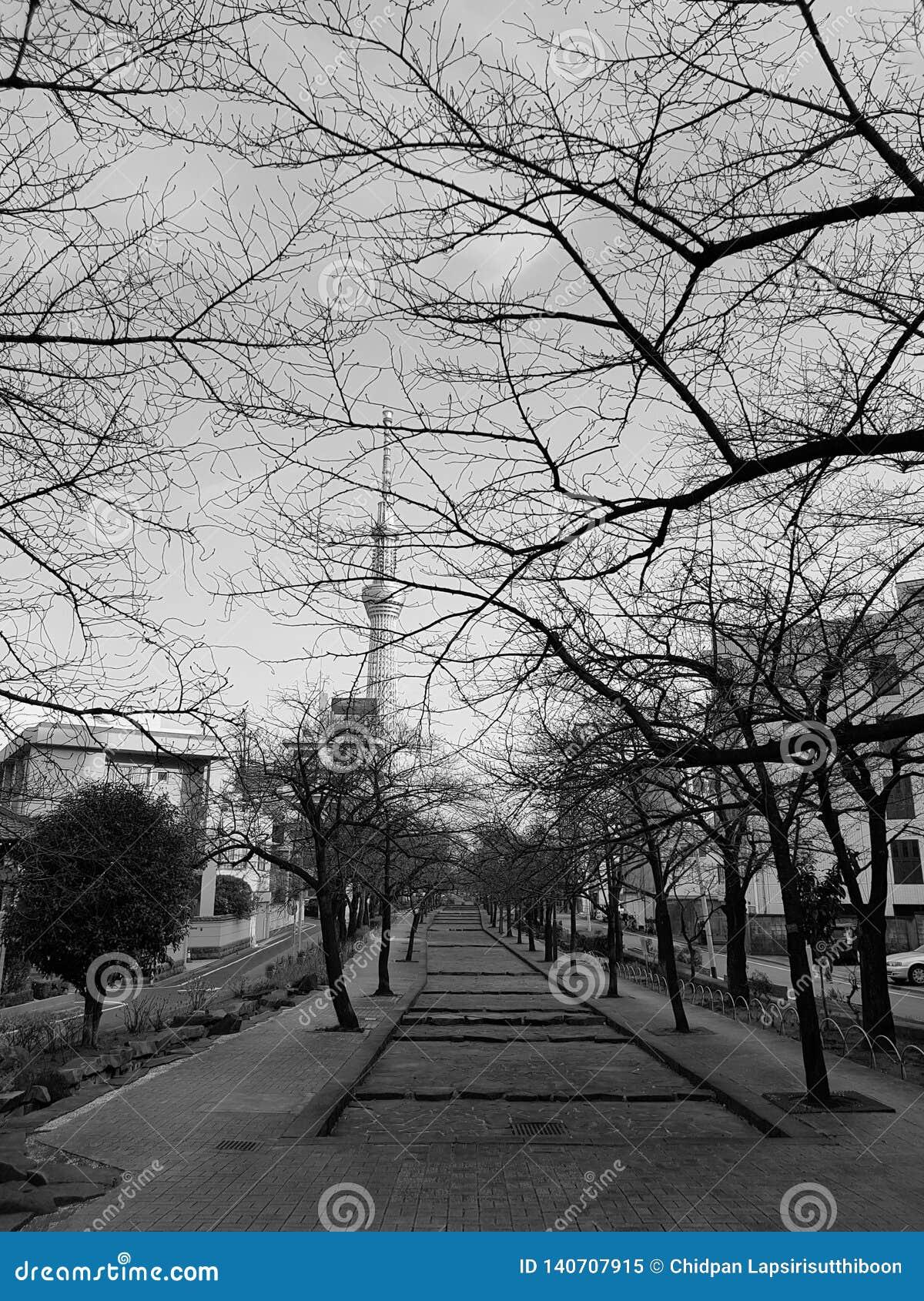 Os parques no outono lá são uma árvore sem folhas E pode ver a construção da árvore do céu do Tóquio em japão preto e branco