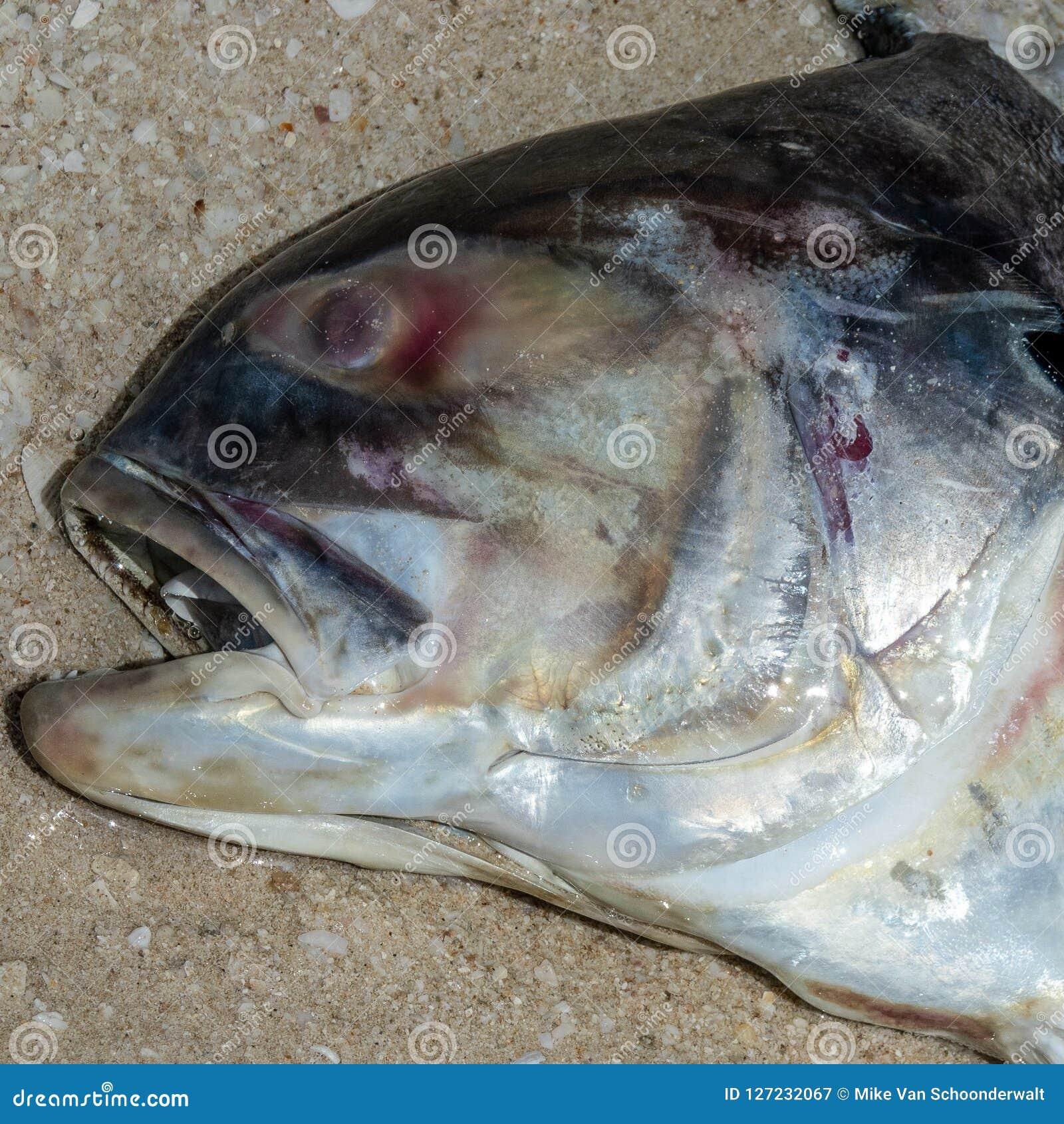 Os peixes inoperantes na imagem da praia? montaram com símbolo decorado do biohazard
