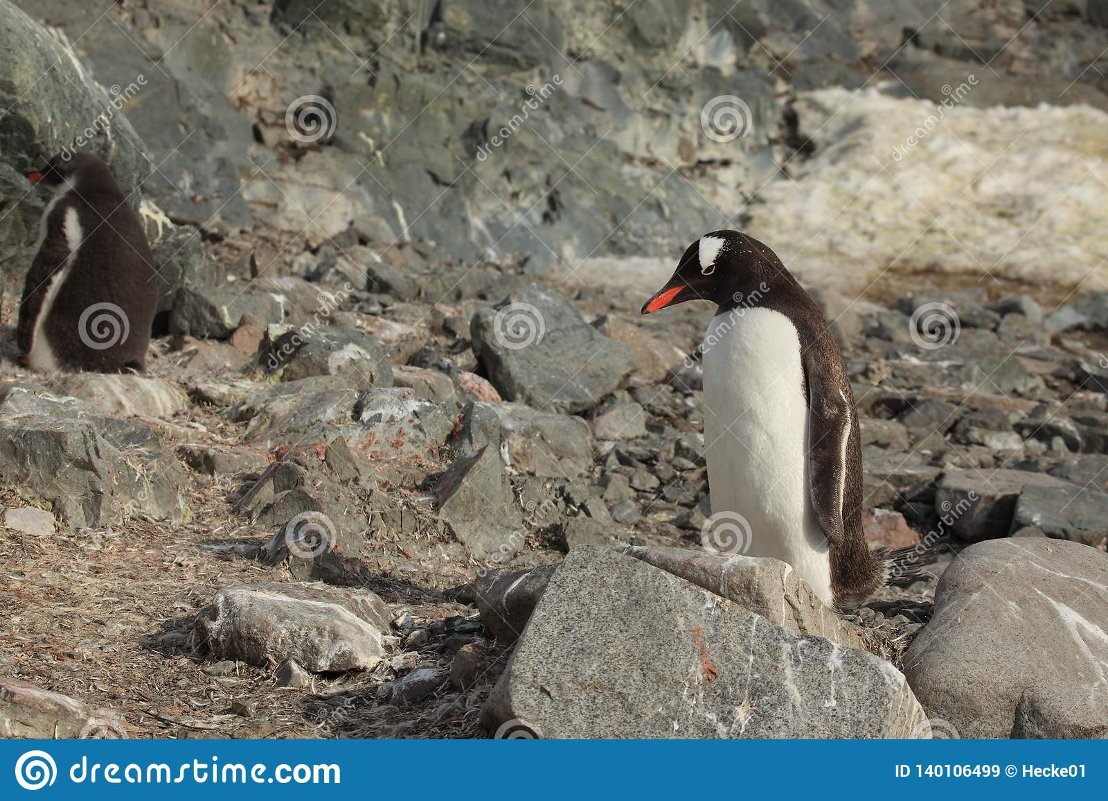 Os pinguins da Antártica