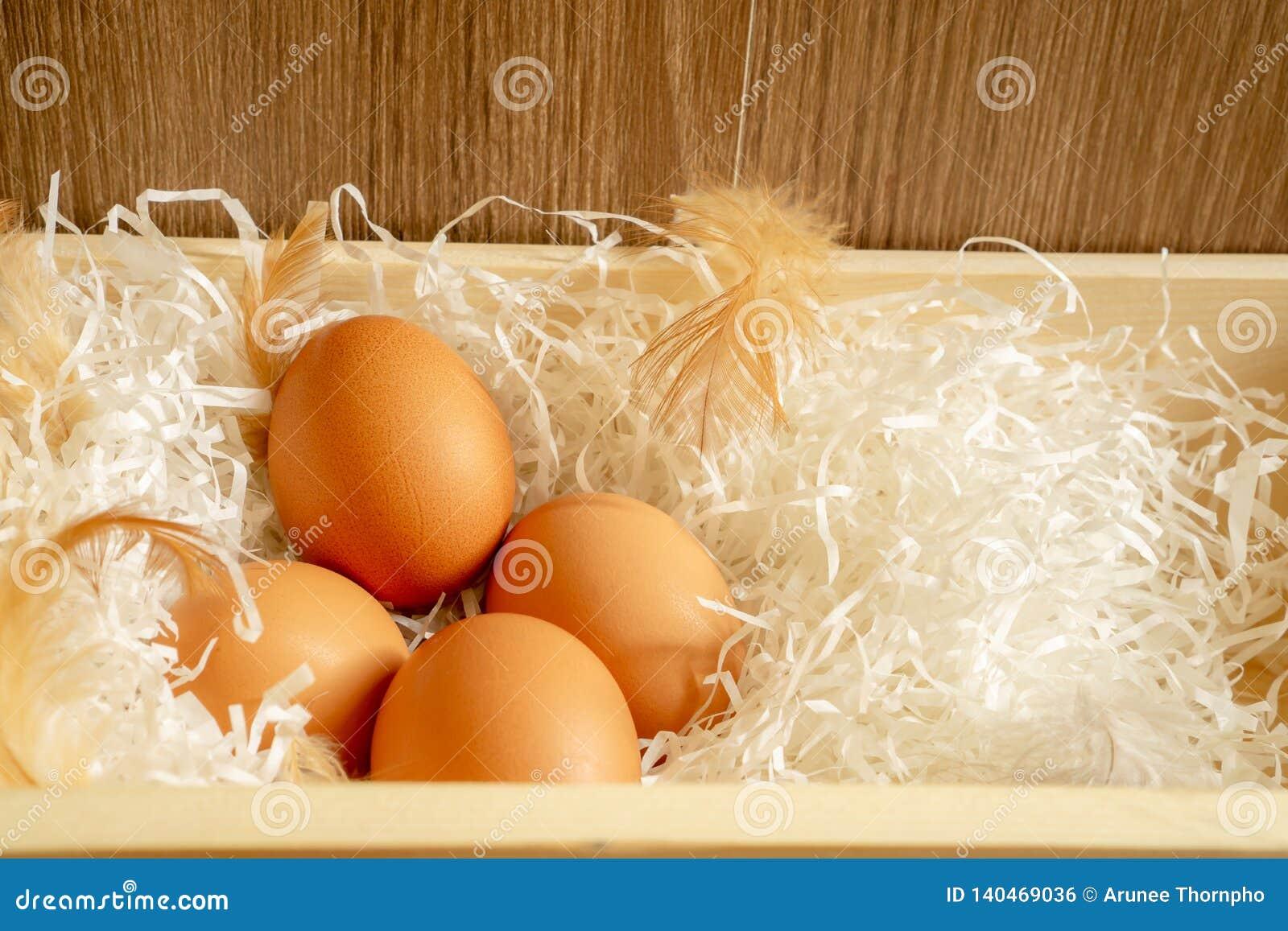 Os quatro ovos da galinha marrom e a pena da galinha no papel shredded branco na cesta de madeira e no fundo marrom