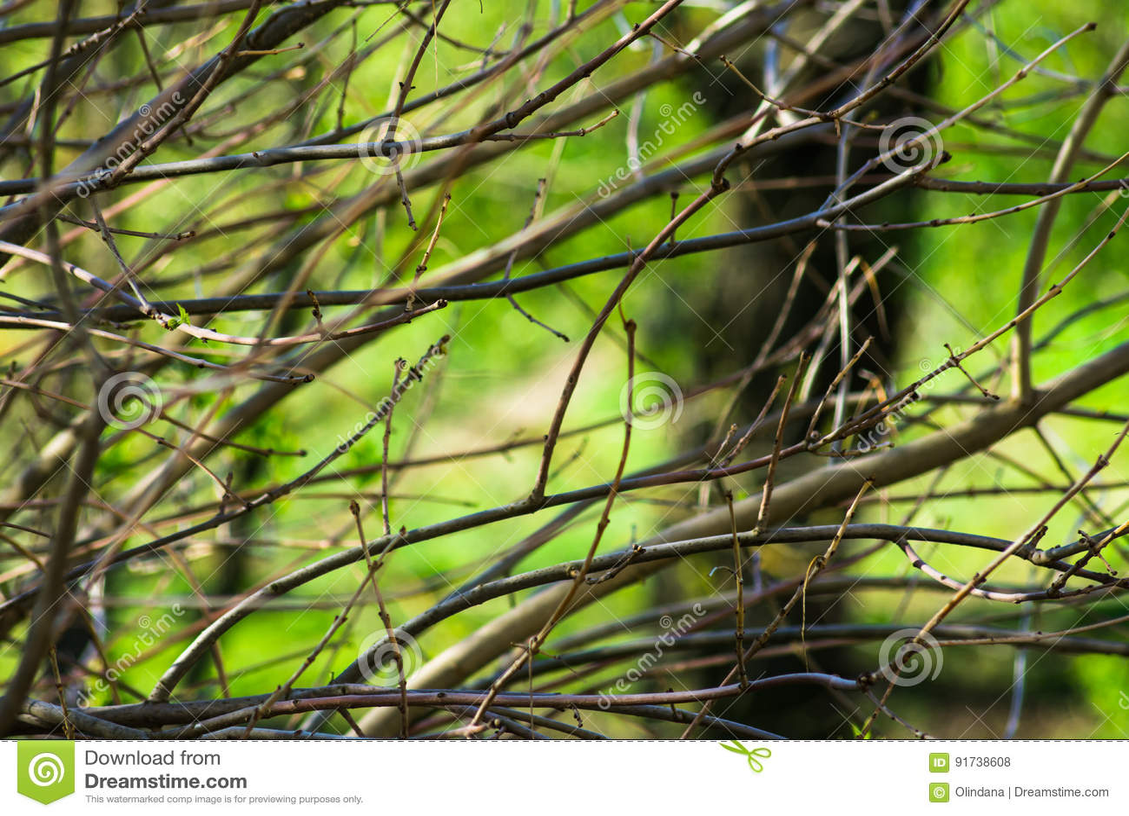 Os ramos de árvore despidos com os botões no tempo de mola esverdeiam o fundo da folha, despertando a natureza, tranquilidade