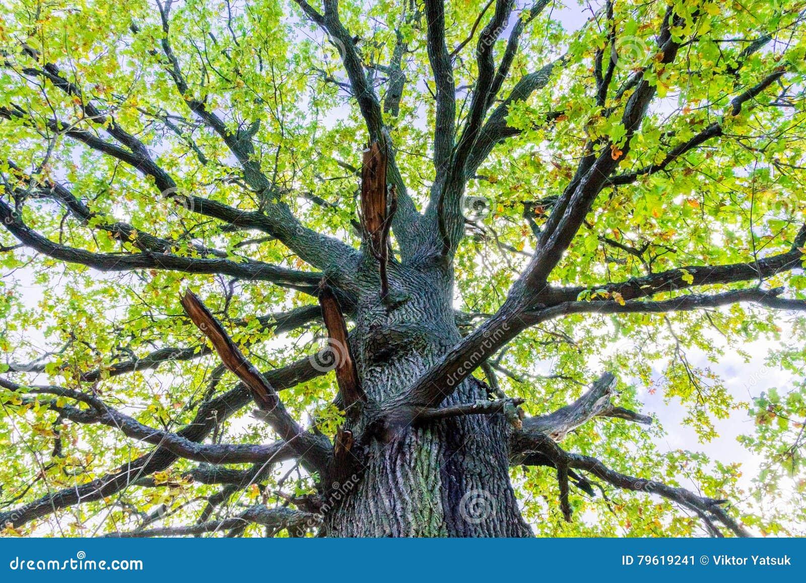 Os ramos de uma árvore alta