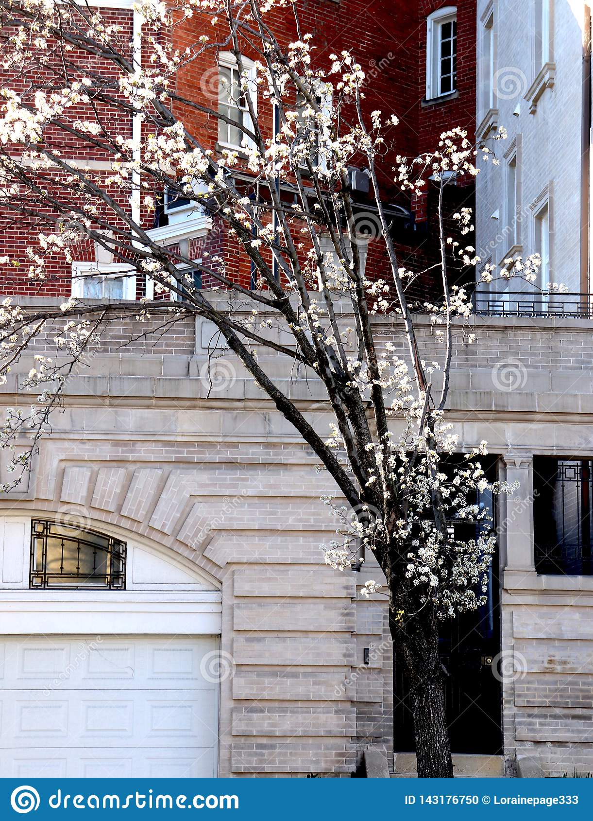 Os ramos que brotam para fora têm as flores brancas
