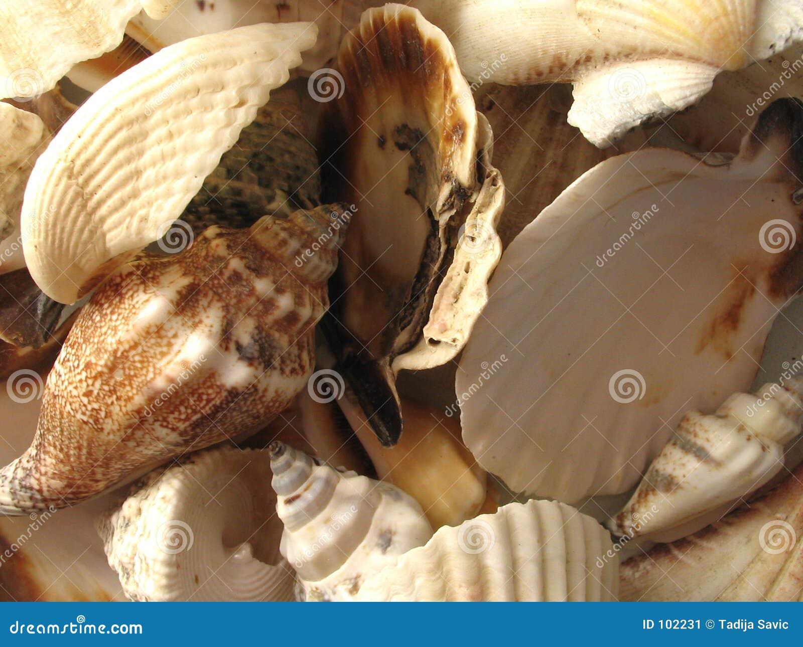 Os Seashells