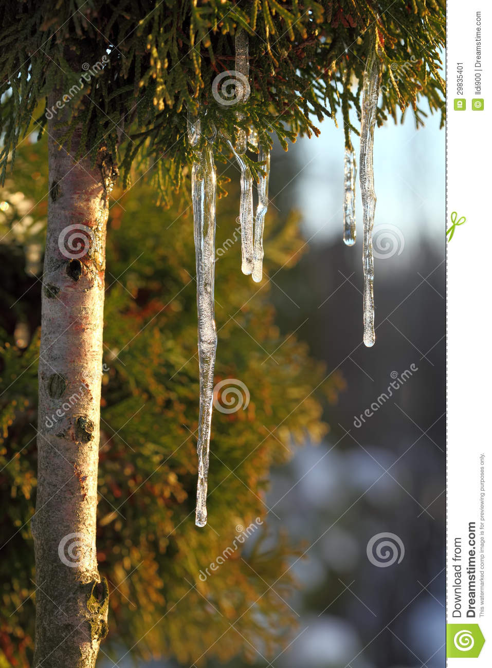 Icicles.Spring.