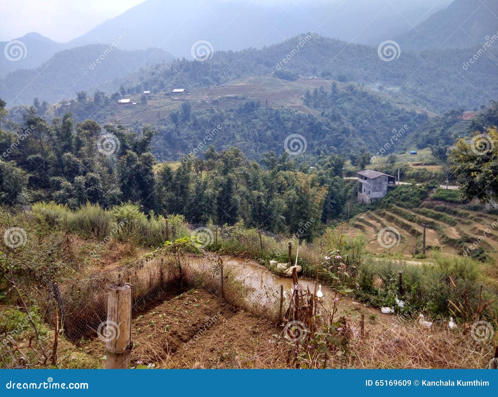 Os terraços do arroz