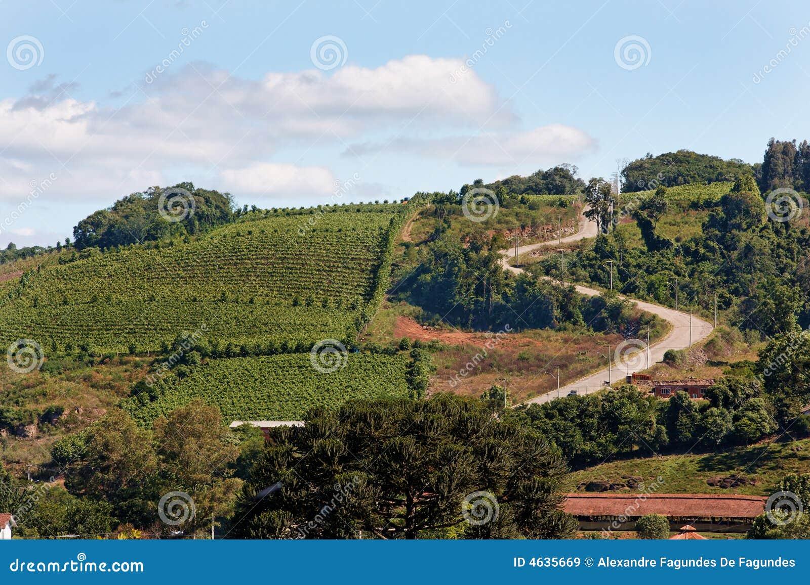 Os vinhedos em Rio Grande fazem Sul