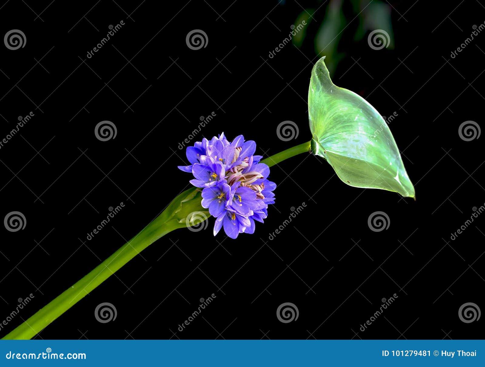 Os wildflowers brancos crescem ao longo dos lagos do lírio,