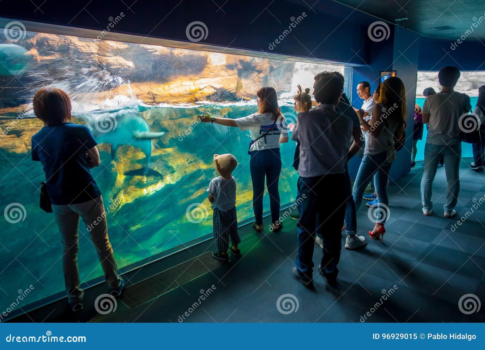 OSAKA, JAPAN - JULI 18, 2017: Dolfijn in Osaka Aquarium Kaiyukan, één van de grootste openbare aquariums in de wereld binnen