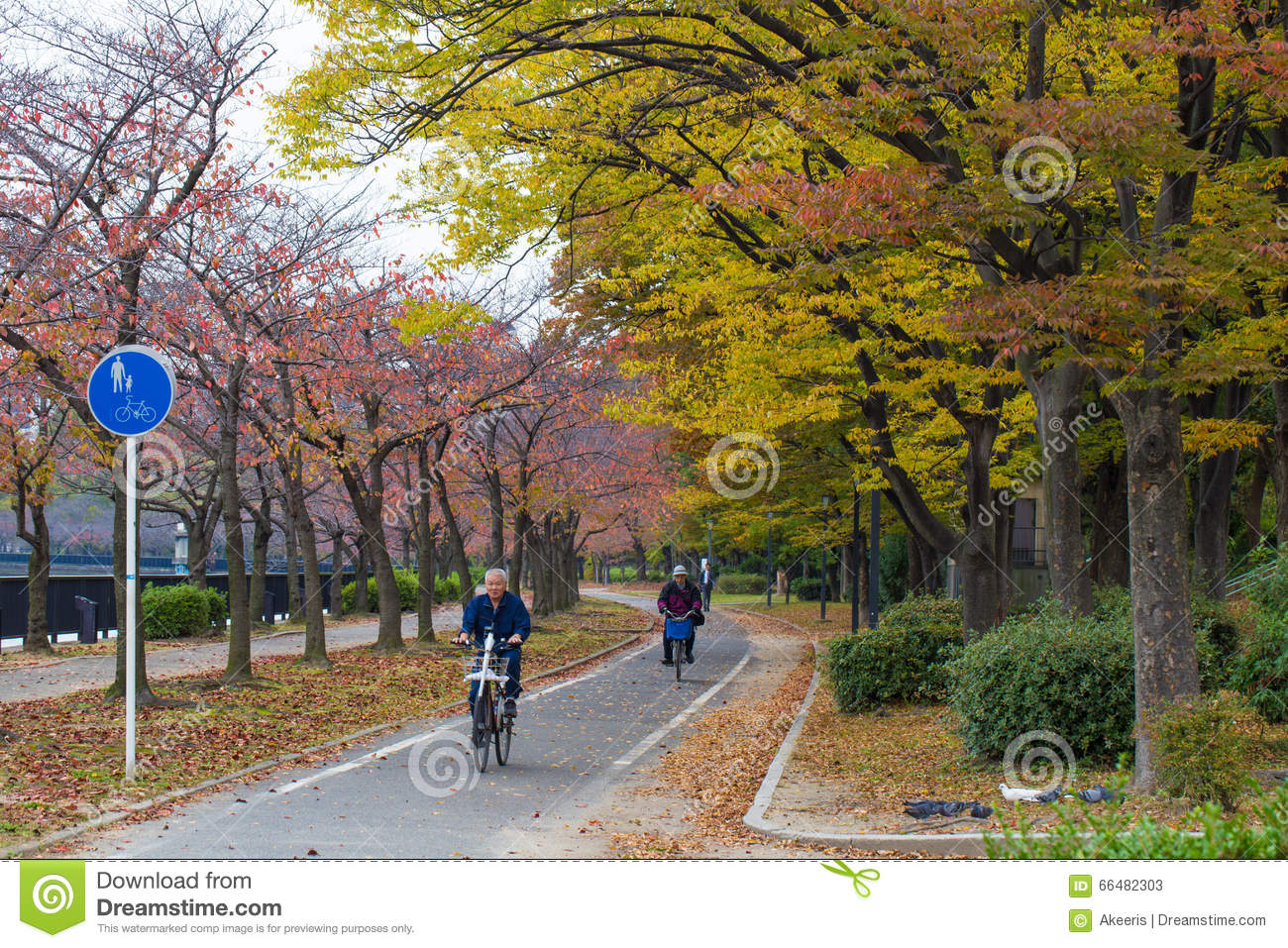 OSAKA, JAPAN - NOVEMBER 13,2015 Public park at Osaka Castle in red Autumn with Japanese business man on bicycle ride to work