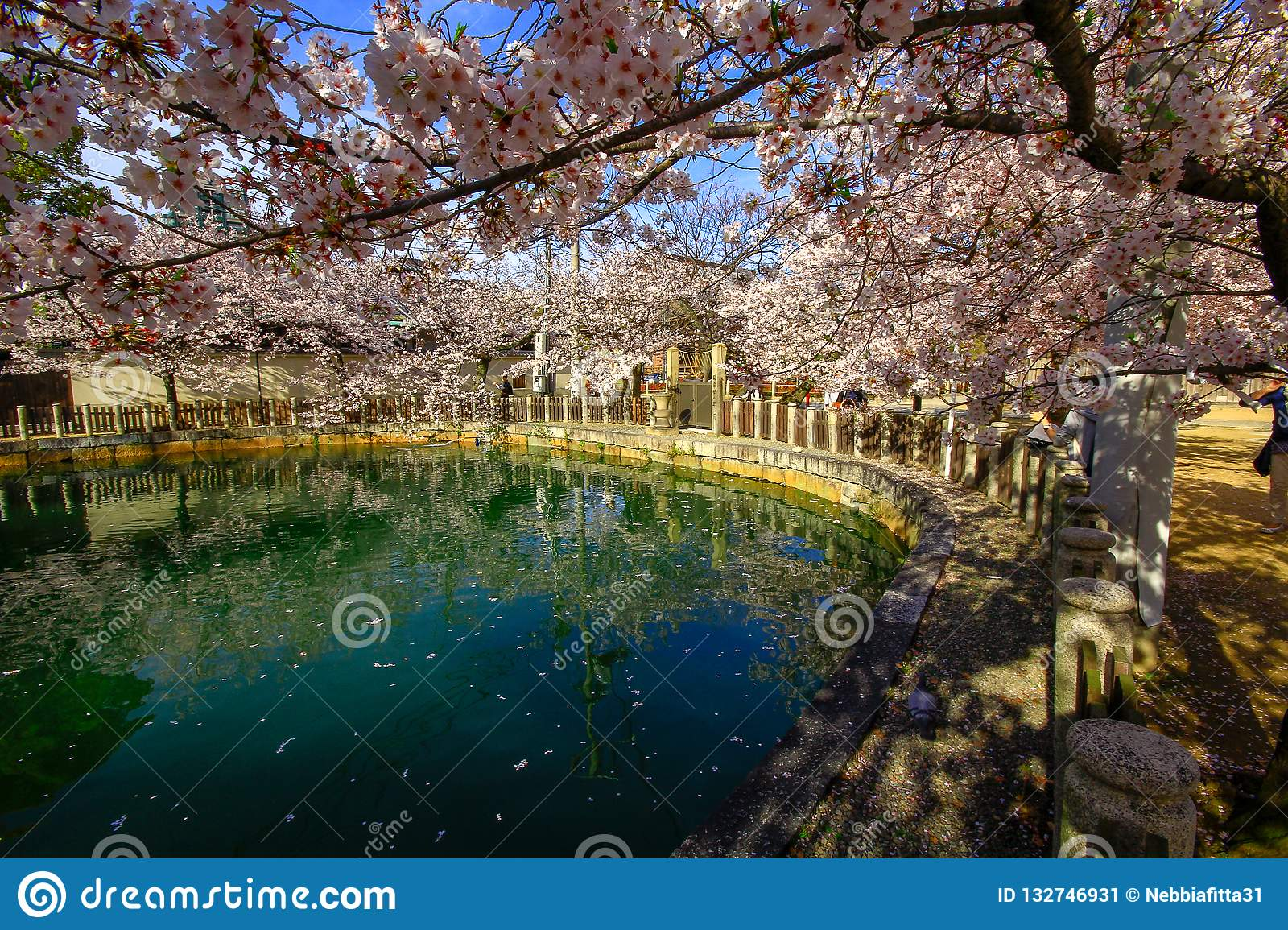 Osaka, Japan. Temple in Osaka in spring, blooming season, cherry blossoms.
