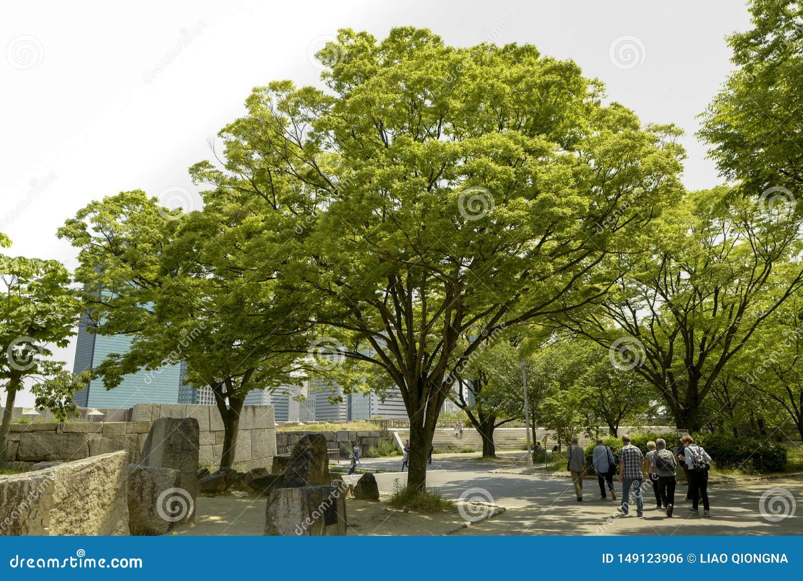 Osaka kasztelu park Osaka kasztel jest jeden Japan?s najwi?cej s?awnych punkt?w zwrotnych