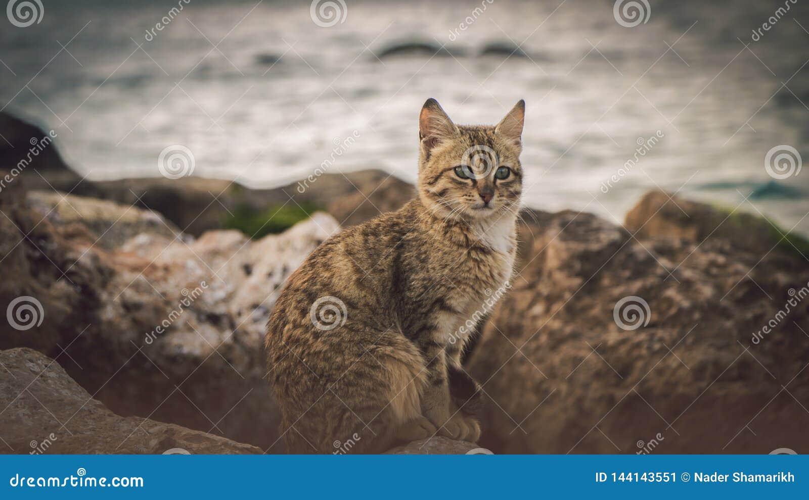 Osamotniony br?zu kota spojrzenie przy morzem
