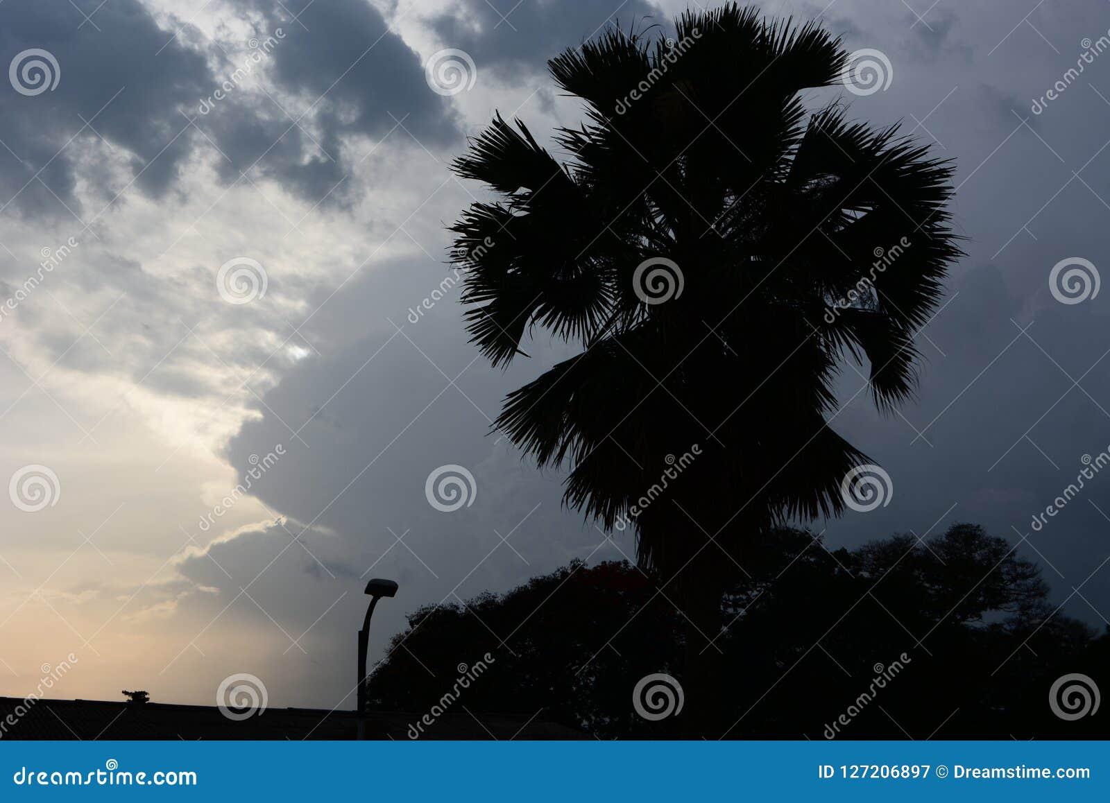 Osamotniony drzewko palmowe