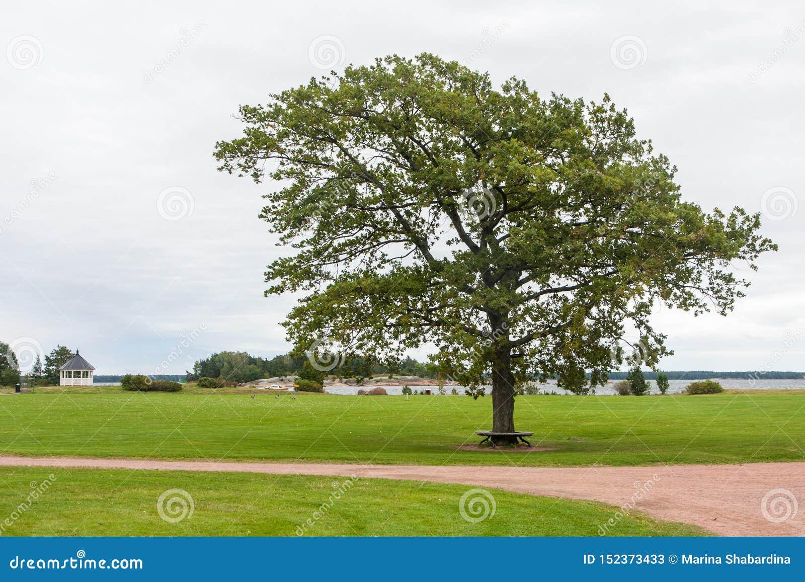 Osamotniony drzewo, ławka, trawa, droga i niebo,