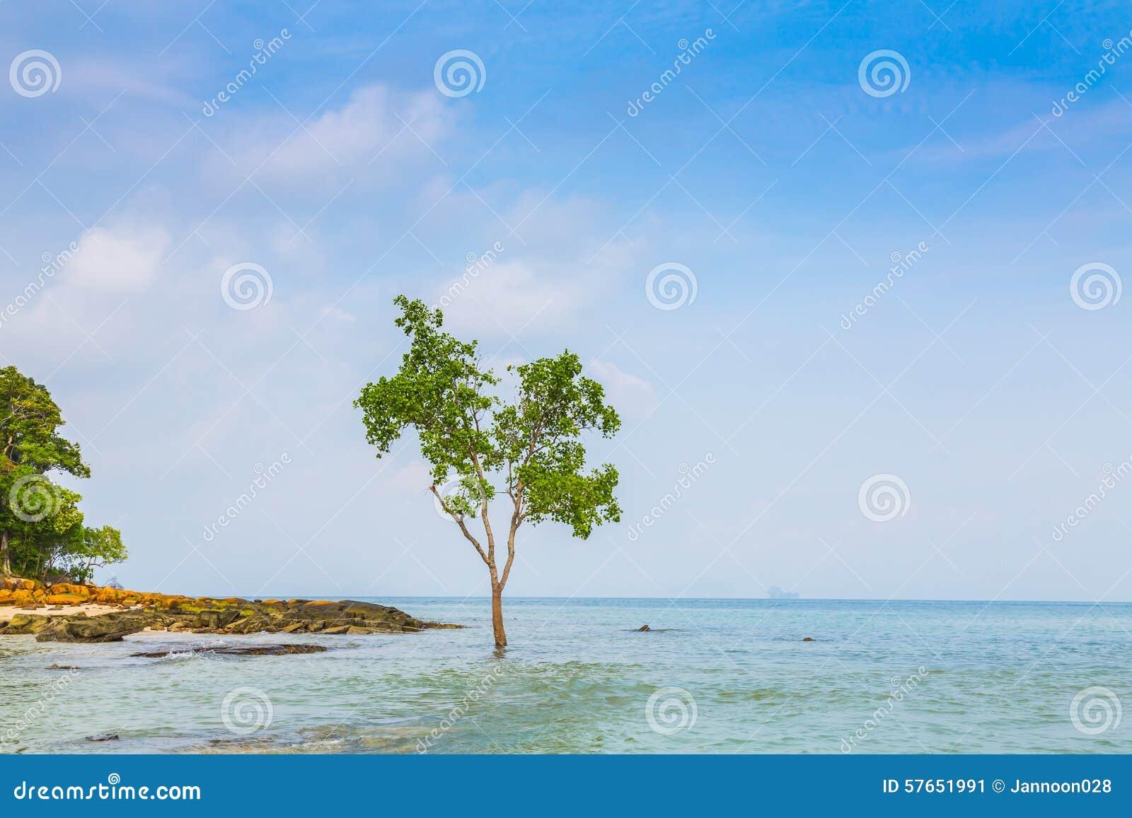 Osamotniony drzewo na Dennym tle
