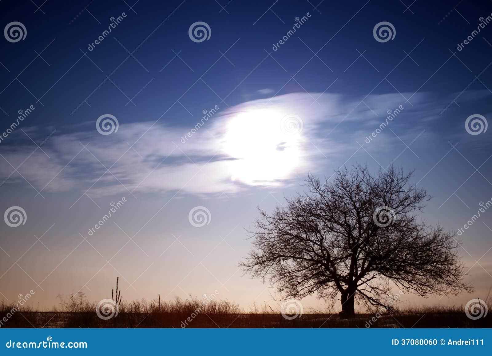 Download Osamotniony drzewo w polu zdjęcie stock. Obraz złożonej z kolory - 37080060