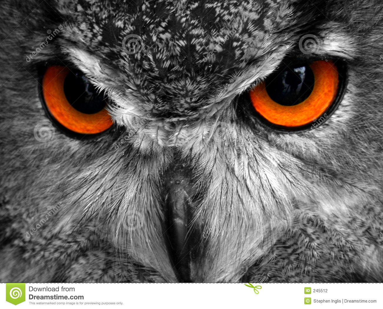 Oscar The Eagle Owl Stock Photo Image Of Feathers Hunter 245512